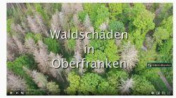 Waldschaeden Oberfranken final